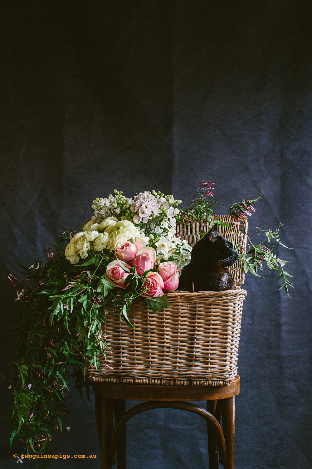 twoguineapigs_pet_photography_cats_and_flowers_series_ruby_slipper_florist