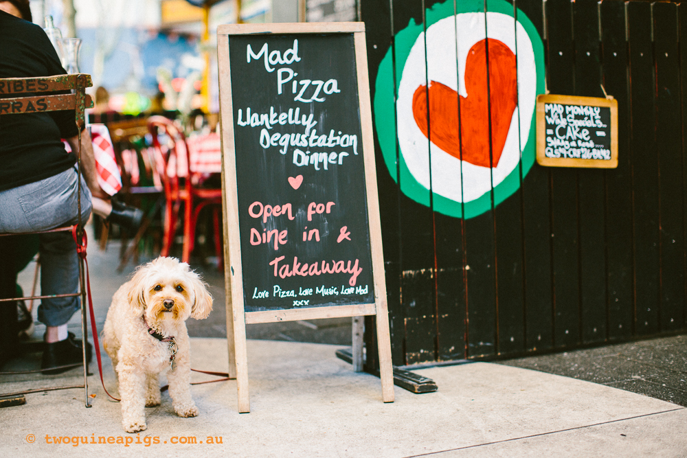 twoguineapigs_pet_photography_streets_mad_pizza_dogs
