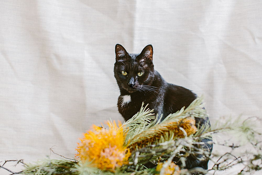 twoguineapigs_photography_ruby_slippers_cat_and_floral_series_1500-3.jpg