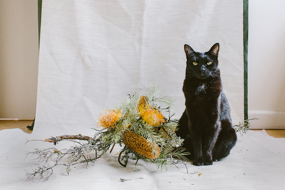 twoguineapigs_photography_ruby_slippers_cat_and_floral_series_1500-6.jpg
