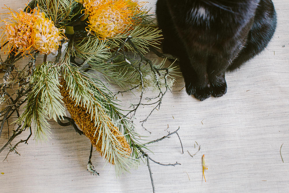 twoguineapigs_photography_ruby_slippers_cat_and_floral_series_1500-7.jpg