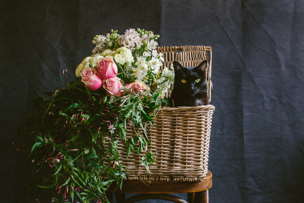 twoguineapigs_photography_ruby_slippers_cat_and_floral_series_1500-17.jpg