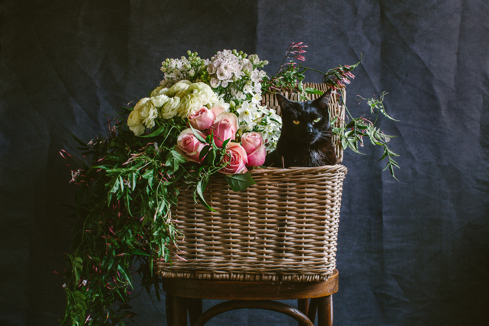 twoguineapigs_photography_ruby_slippers_cat_and_floral_series_1500-18.jpg
