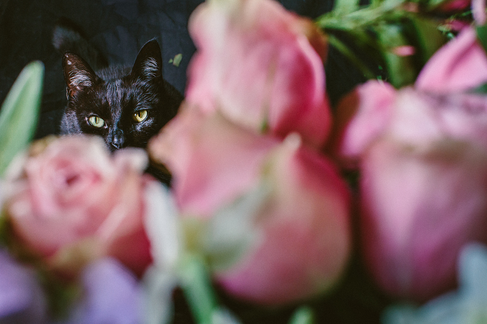 twoguineapigs_photography_ruby_slippers_cat_and_floral_series_1500-21.jpg