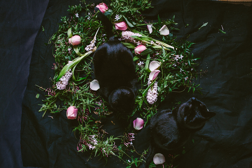twoguineapigs_photography_ruby_slippers_cat_and_floral_series_1500-23.jpg