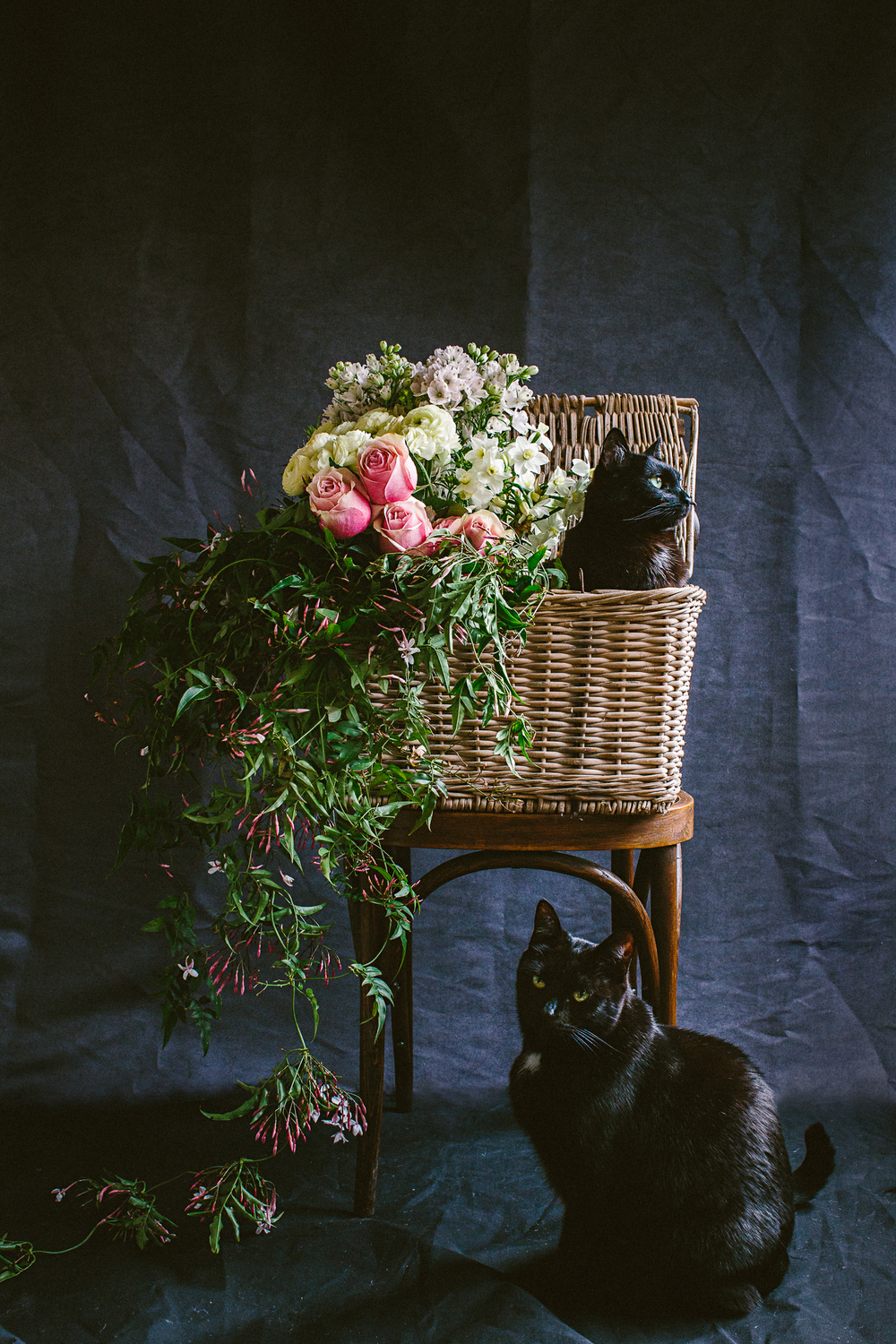 twoguineapigs_photography_ruby_slippers_cat_and_floral_series_1500-14.jpg