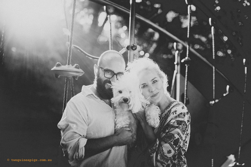 twoguineapigs_pet_photography_dalston_1st_birthday_havanese_liv_lundelius