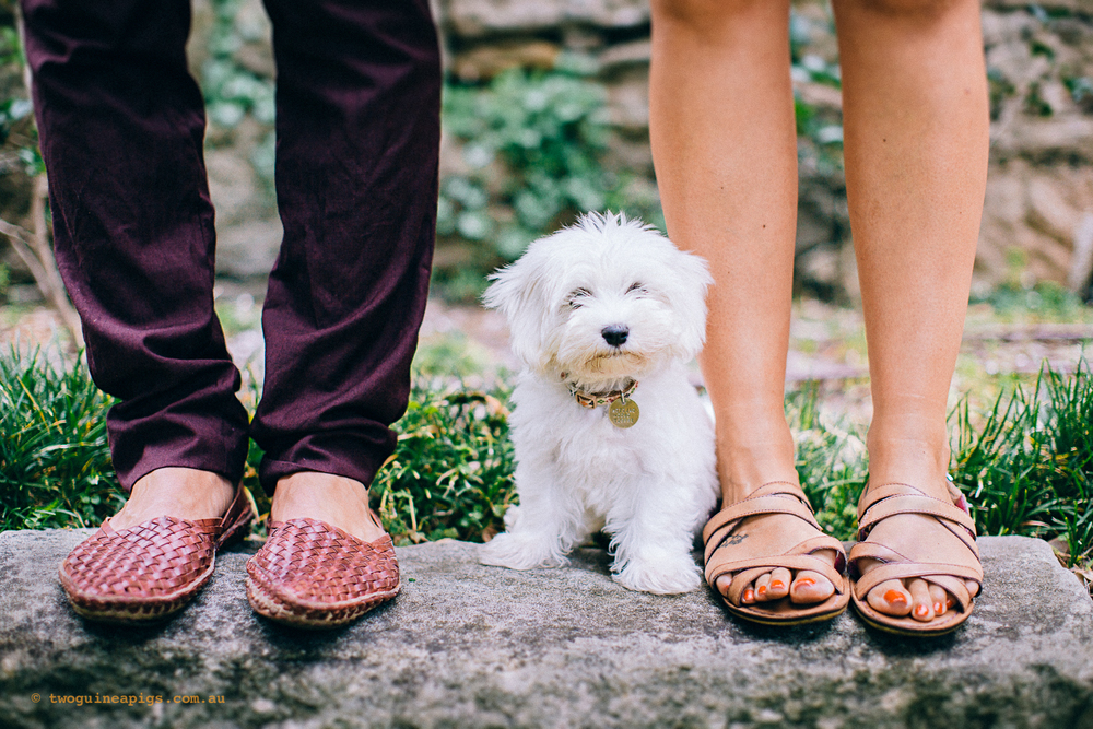 twoguineapigs_pet_photography_dalston_havanese_puppy_family_session_dog_photography_liv_lundelius