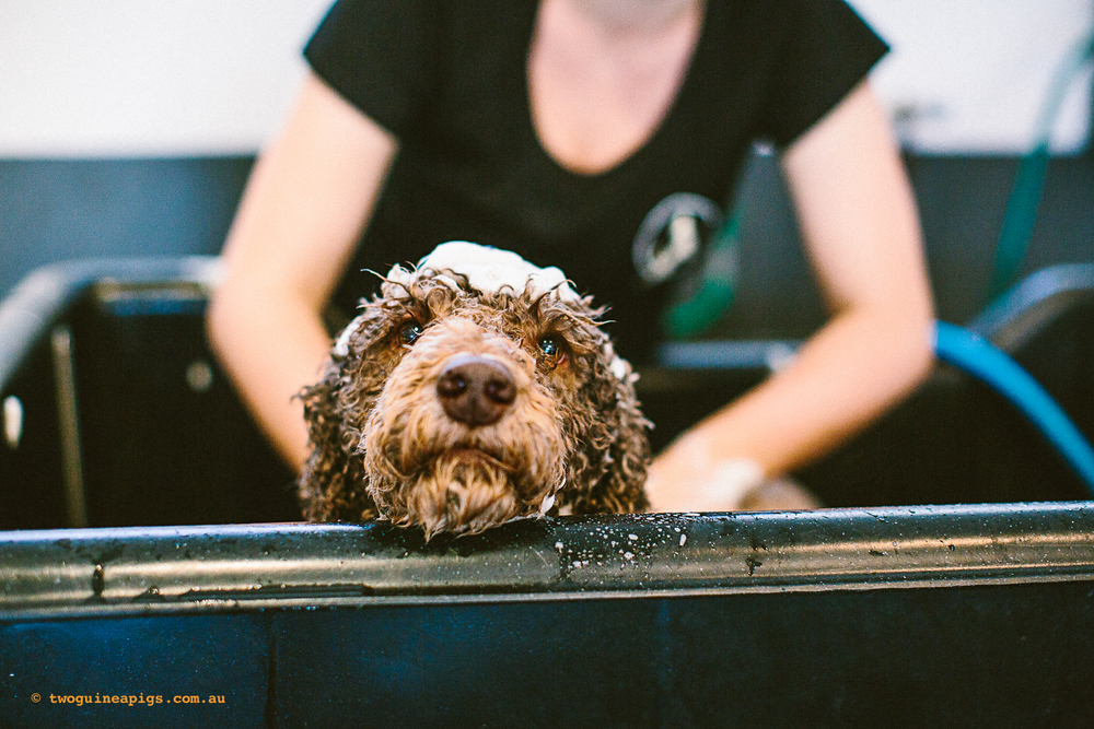 twoguineapigs_pet_photography_happy_paws_fitness_dog_bathing_1500-3.jpg