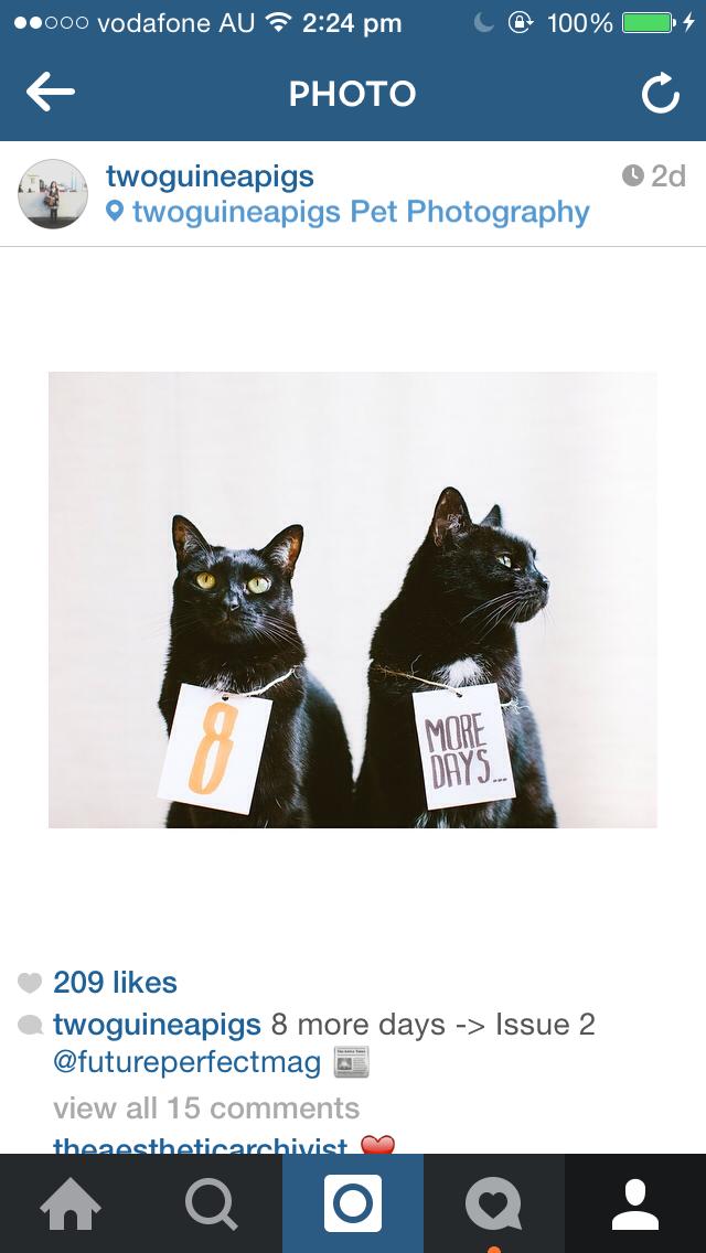 twoguineapigs_instagram