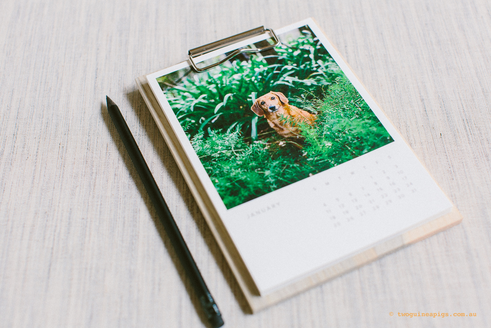 twoguineapigs_pet_photography_artifact_uprising_wood_calendar_riley_daschoundx_gaussen_1500-1.jpg