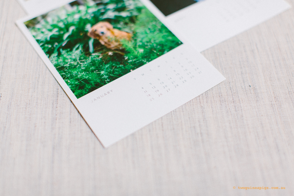 twoguineapigs_pet_photography_artifact_uprising_wood_calendar_riley_daschoundx_gaussen_1500-6.jpg