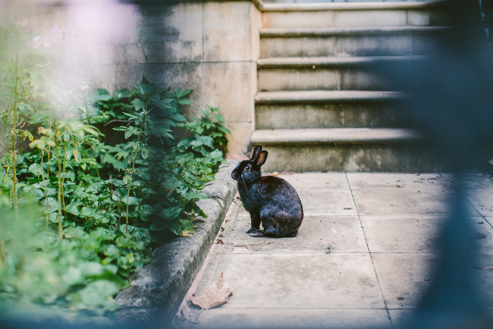 60_twoguineapigs_pet_photography_location_scout_coopers_park_woollahra_1500.jpg