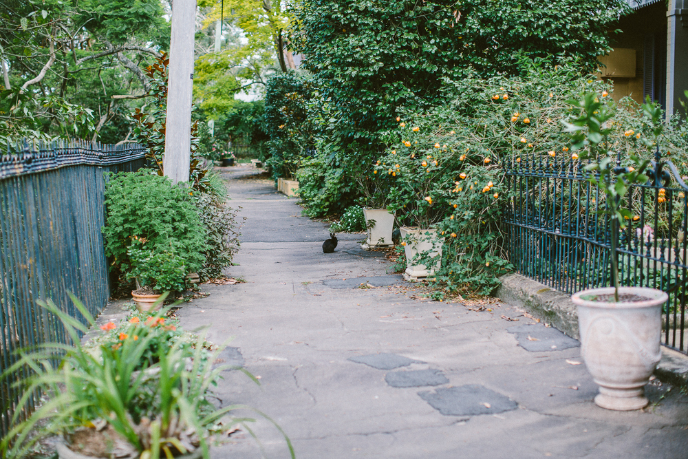 69_twoguineapigs_pet_photography_location_scout_coopers_park_woollahra_1500.jpg