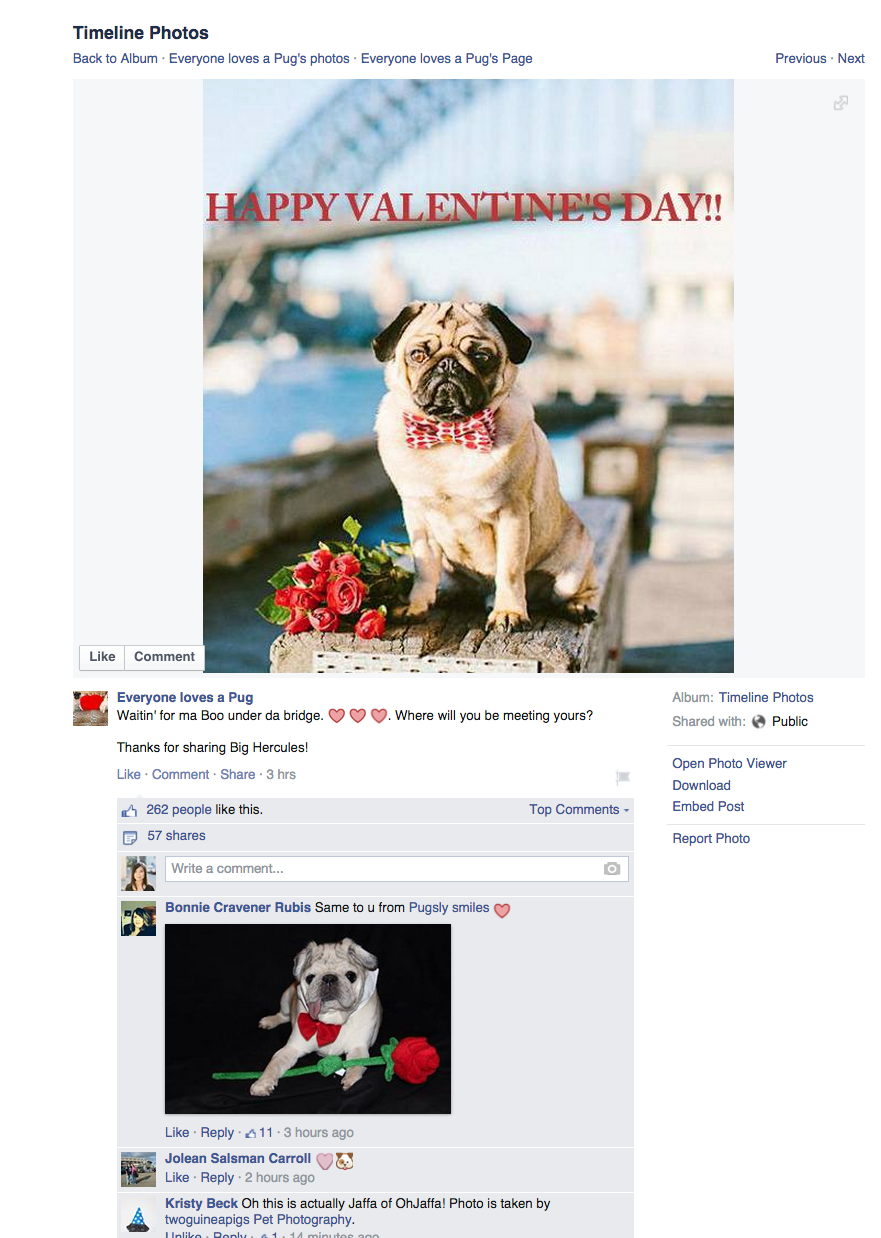twoguineapigs_pet_photography_copyright_infringement_everyone_loves_a_pug