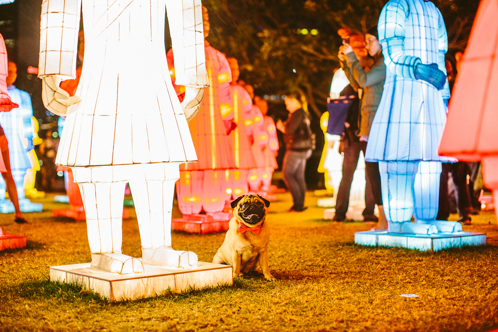 twoguineapigs_pet_photography_ohjaffa_bowties_dog_pug_lanterns_of_the_terracotta_warriors