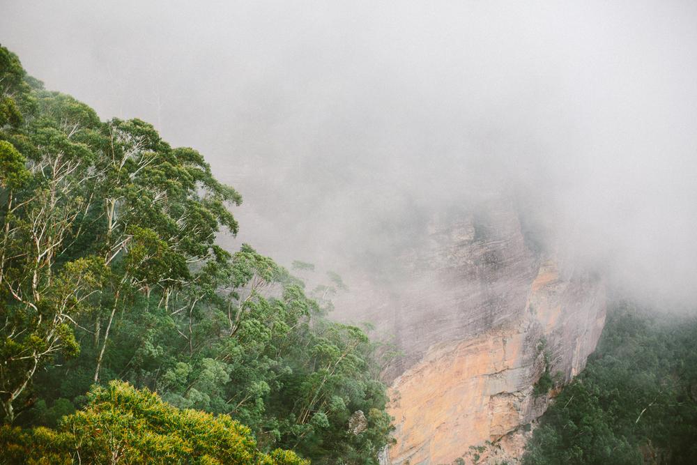 twoguineapigs_pet_photography_blue_mountain_roadtrip_fog_1500-05.jpg
