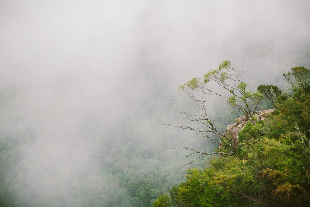 twoguineapigs_pet_photography_blue_mountain_roadtrip_fog_1500-06.jpg