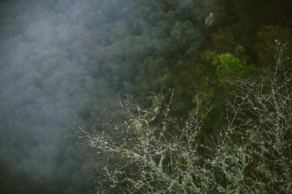 twoguineapigs_pet_photography_blue_mountain_roadtrip_fog_1500-07.jpg