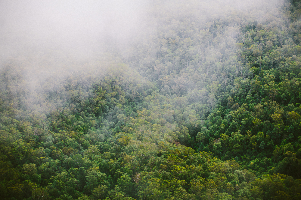 twoguineapigs_pet_photography_blue_mountain_roadtrip_fog_1500-09.jpg
