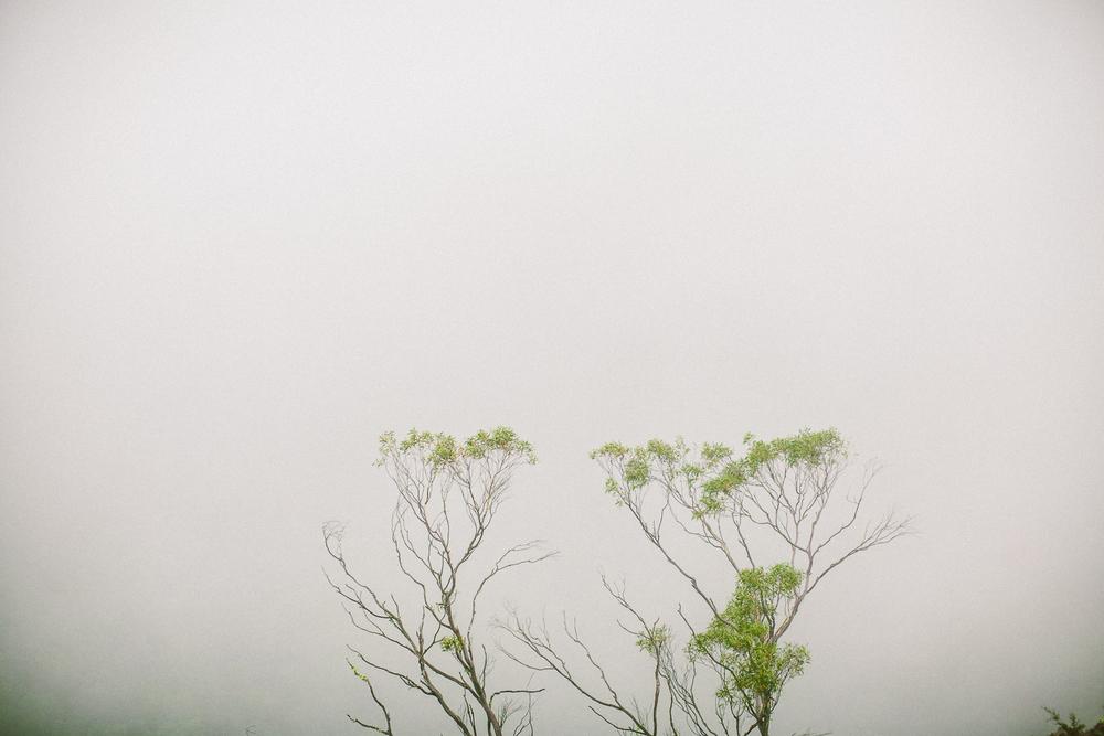 twoguineapigs_pet_photography_blue_mountain_roadtrip_fog_1500-10.jpg