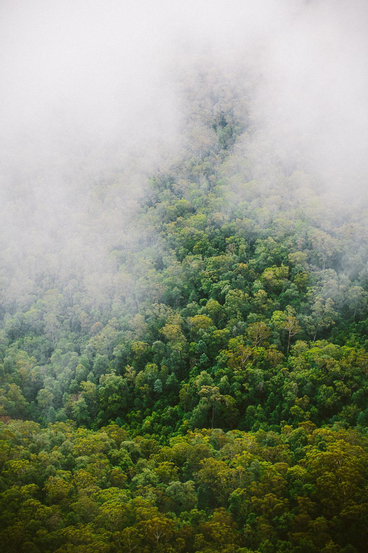 twoguineapigs_pet_photography_blue_mountain_roadtrip_fog_1500-08.jpg