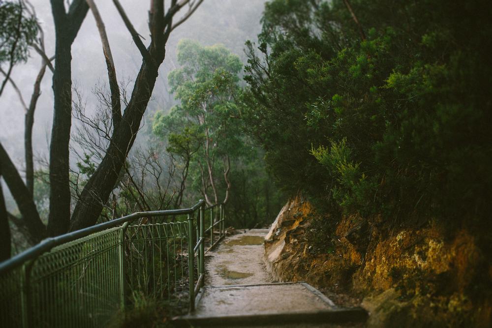 twoguineapigs_pet_photography_blue_mountain_roadtrip_fog_1500-13.jpg