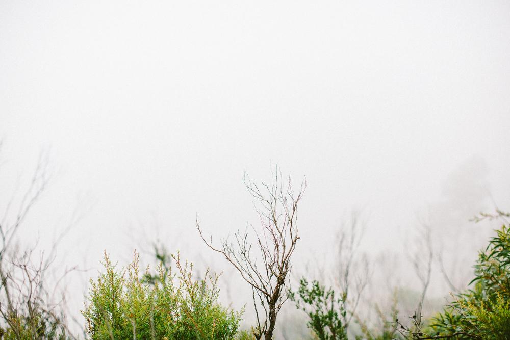 twoguineapigs_pet_photography_blue_mountain_roadtrip_fog_1500-14.jpg