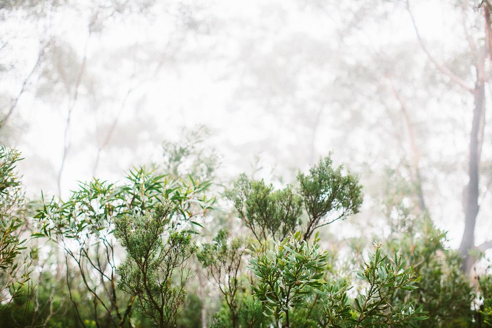 twoguineapigs_pet_photography_blue_mountain_roadtrip_fog_1500-12.jpg