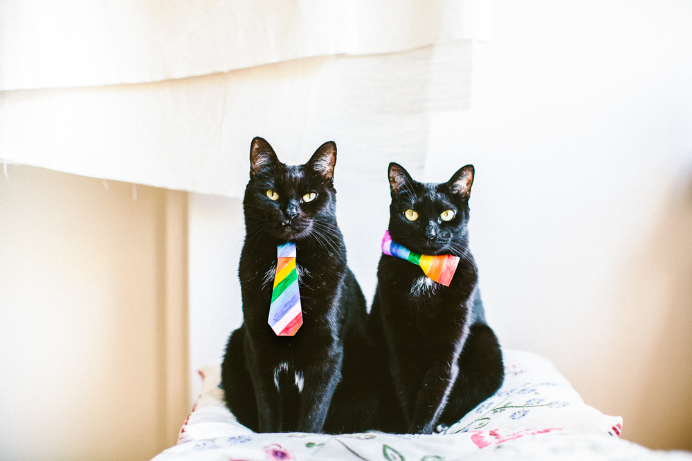 twoguineapigs_pet_photography_mardi_gras_rainbow_pussy_black_cats_bombay_cats_kingscross_pottspoint