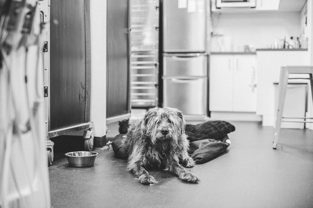 twoguineapigs_pet_photography_potts_point_veterinary_hospital_dogward