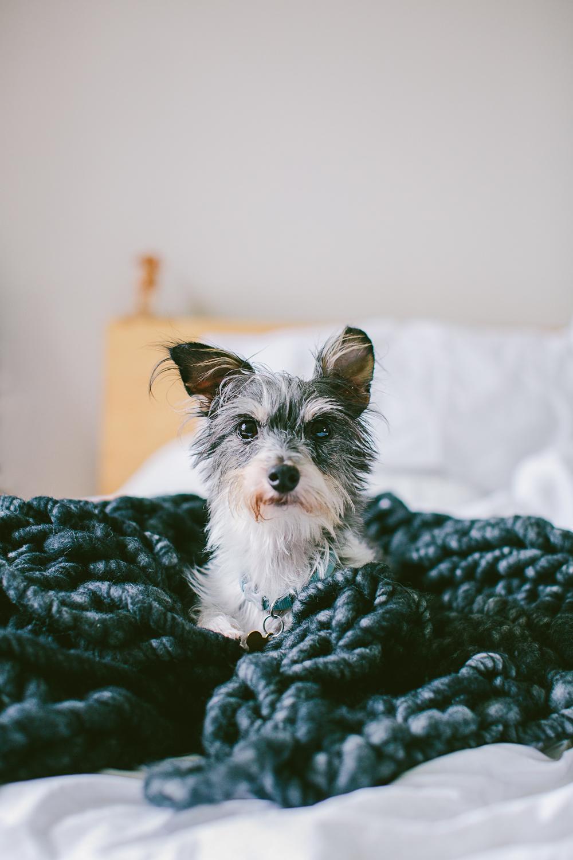 twoguineapigs_ash_chunky_blanket_marikit_by_kitty_choy_WEBSITE_1500-2.jpg