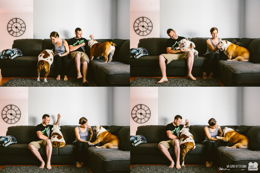 twoguineapigs_pet_photography_bentlee_brooklands_english_bulldogs_currans_hill_dog_photography