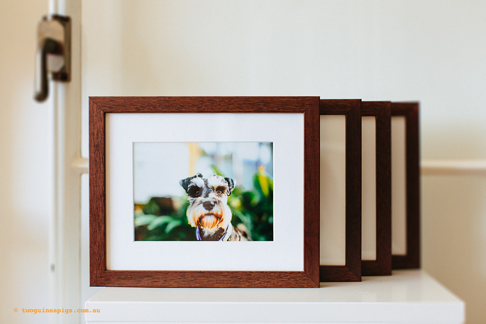 twoguineapigs_pet_photography_custom_wall_art