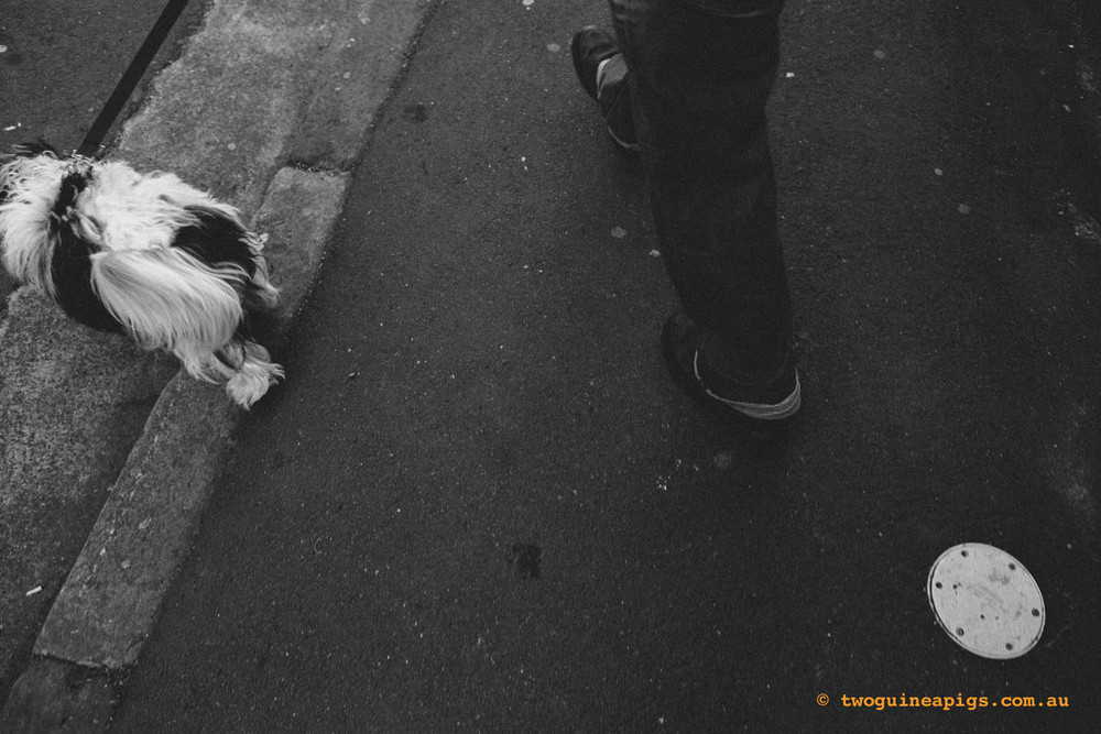 twoguineapigs_pet_photography_street_creature_series
