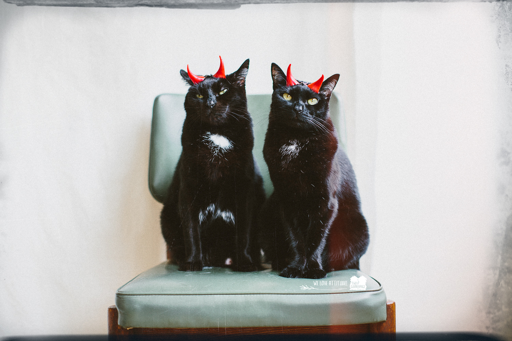 twoguineapigs_pet_photography_black_cats_halloween_the_devils