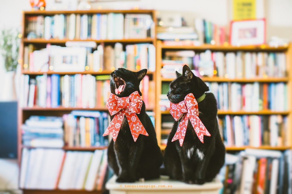 twoguineapigs_pet_photography_blackcats_happy_christmas_red_ribbons_christmas_madness_behind-the-scenes