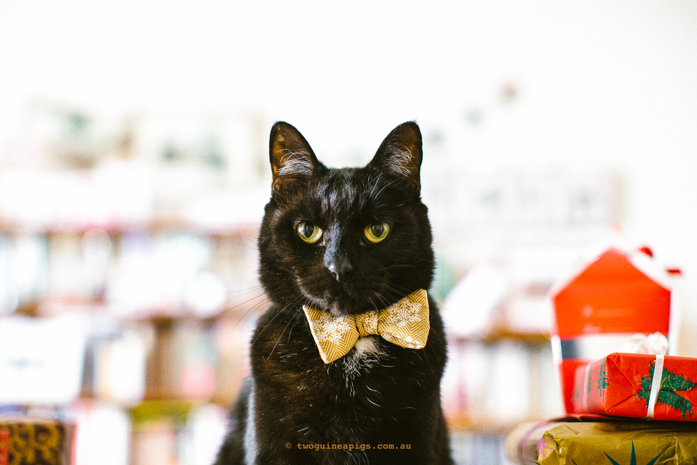 twoguineapigs_pet_photography_blackcats_happy_christmas_red_ribbons_christmas_morning_black_cats_mrbig_behind-the-scenes_catinberlin_bowties