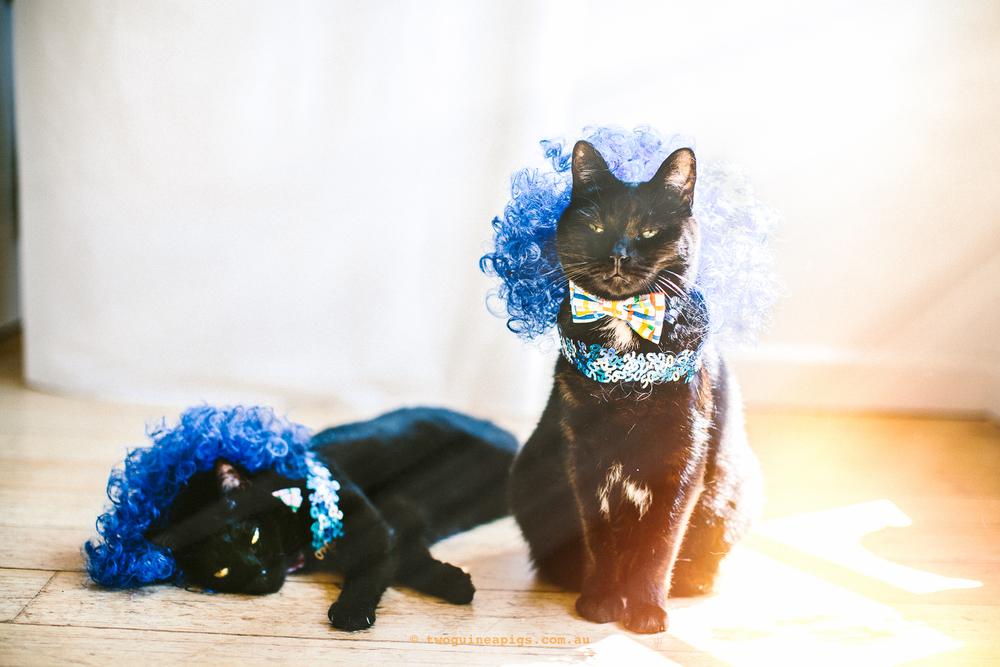 twoguineapigs_pet_photography_blackcats_pf_mrbig_mardi_gras_LGBTQ