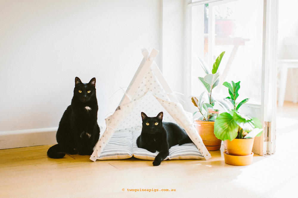 twoguineapigs_jkblackwell_blackcats_mrbig_pf_dog_n_teepee_tent_product_cats_1500-3.jpg
