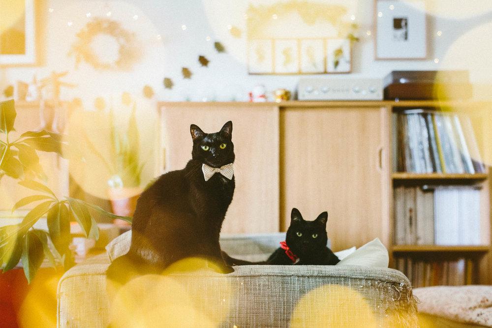 ©twoguineapigs_blackcats_christmas_mrbig_pf