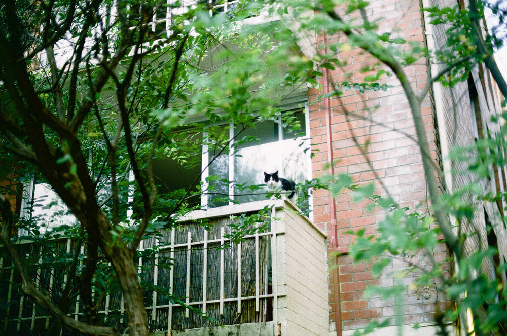 ©twoguineapigs.com.au | fujifilm c200 on Canon AE-1