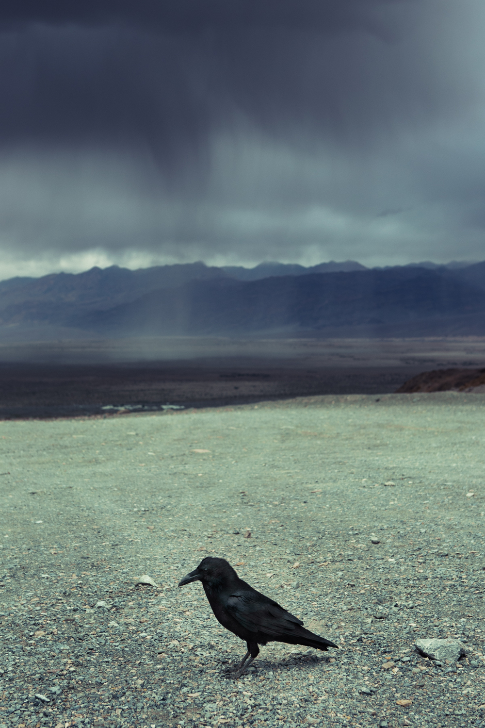 Crow and Storm - Death Valley