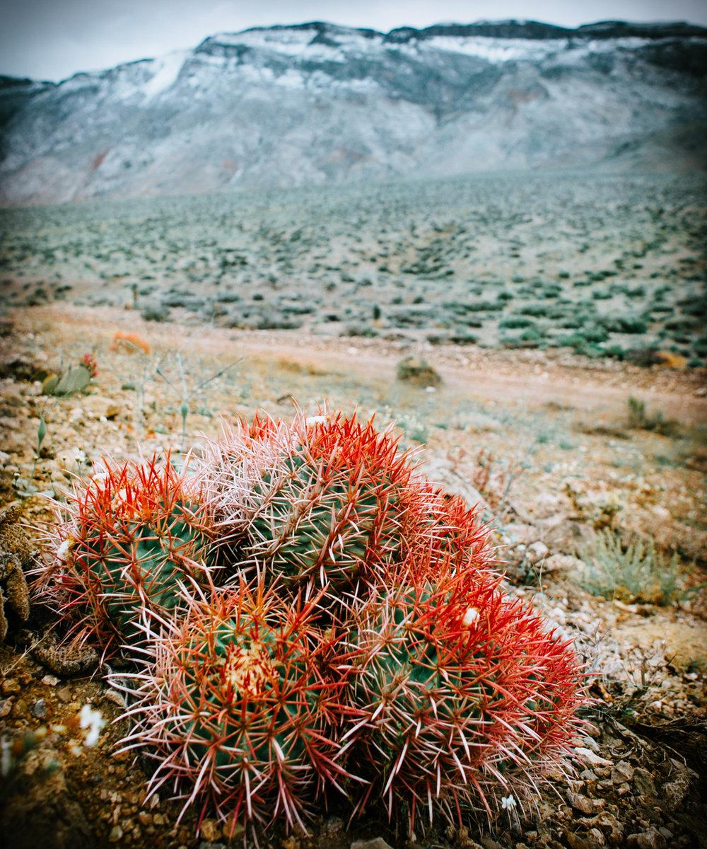 Nature Portfolio-9046-2.jpg