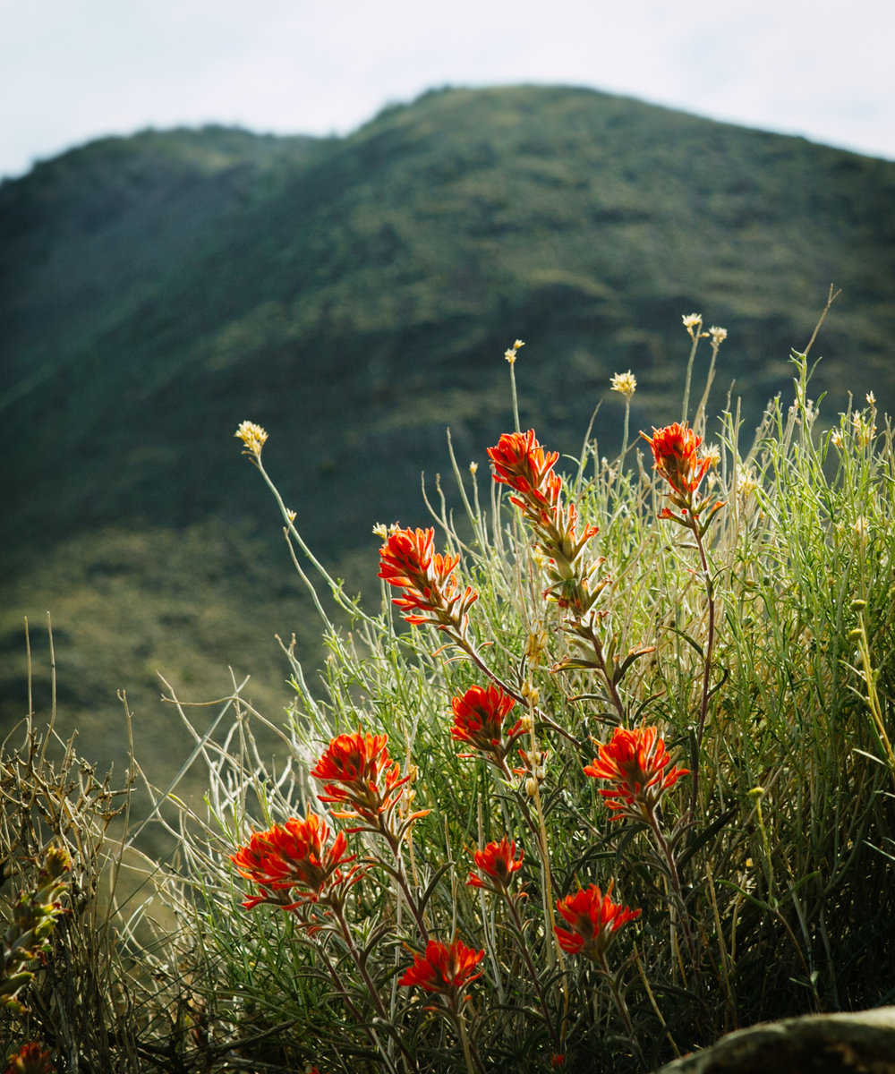 Nature Portfolio-8363.jpg