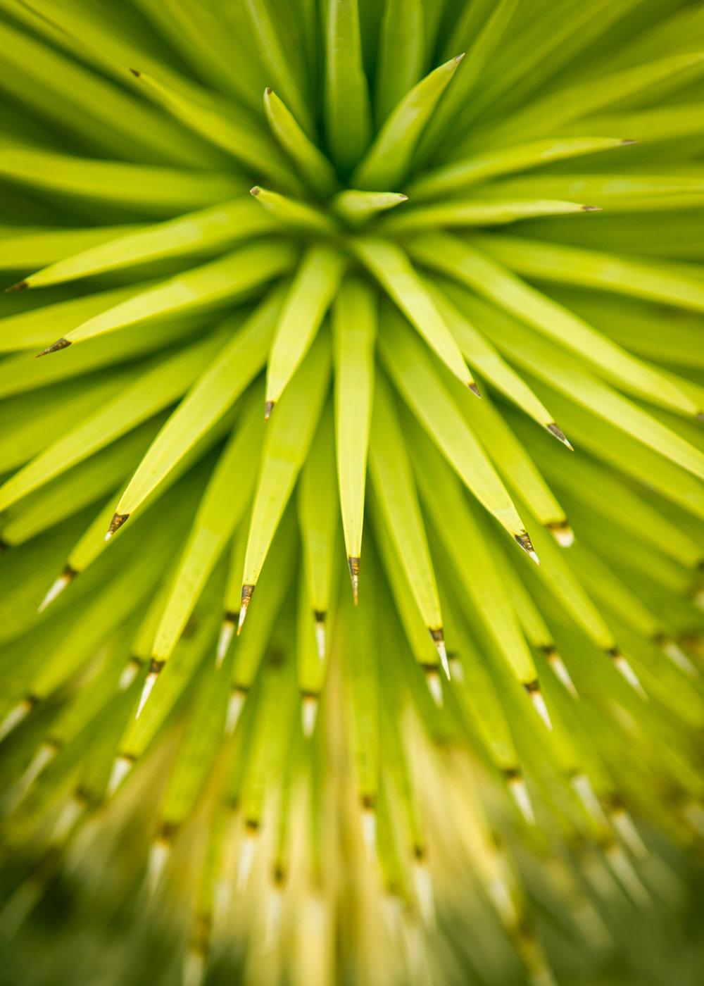 Nature Portfolio-8782.jpg