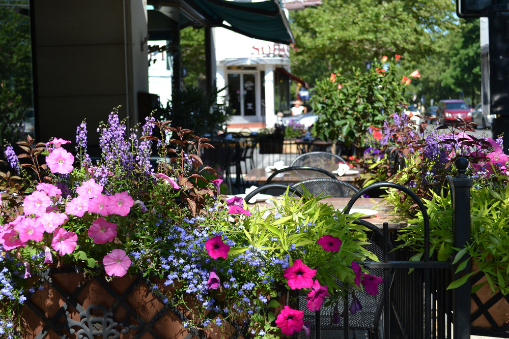 guisseppe flowers.jpg