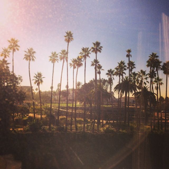 Nice to see palm trees when you wake up.