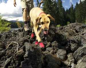 grip-trex-dog-boot-lava-rock.jpg