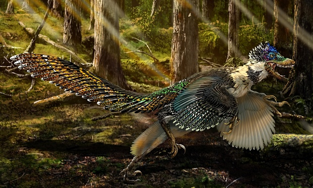 Beautifully preserved skeleton fossil discovered of raptor two metres long with impressive plumage that lived 125m years ago in northeastern China